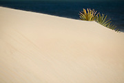 Plant growing on sand dune, Lamu, Kenya, Africa