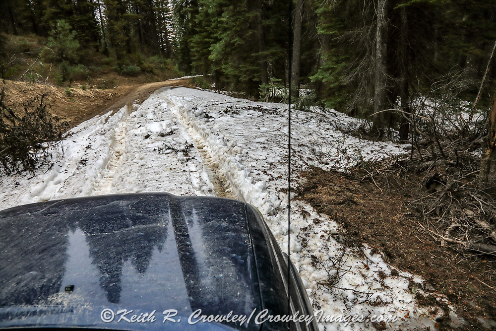 Leftover snow drifts are just one obstacle to contend with during a spring bear hunt with hounds in Idaho.