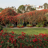 View of the flower-filled courtyard and restaurant area of the Museo Larco in Lima, Peru.