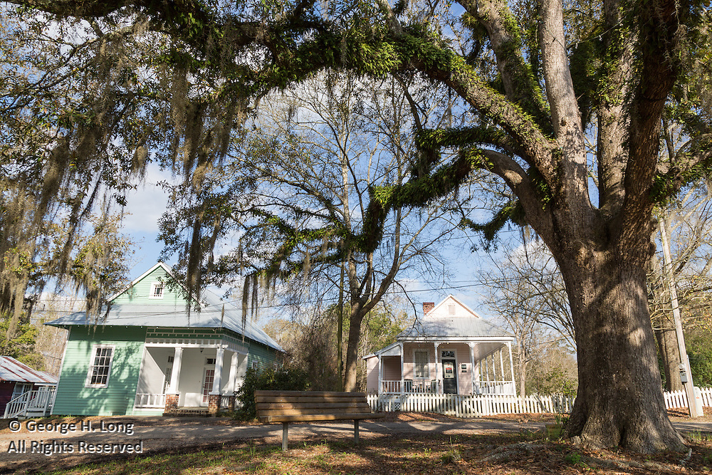 limbs of oak tree on Highway 36 in Abita Springs, Louisiana