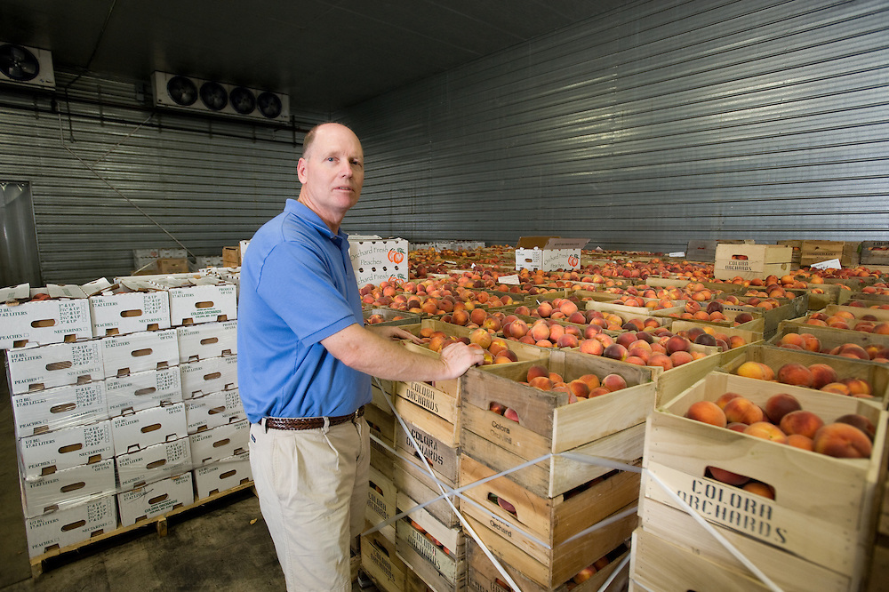 Steve Balderson organizing peaches at Colora Orchards, Cecil County, Md