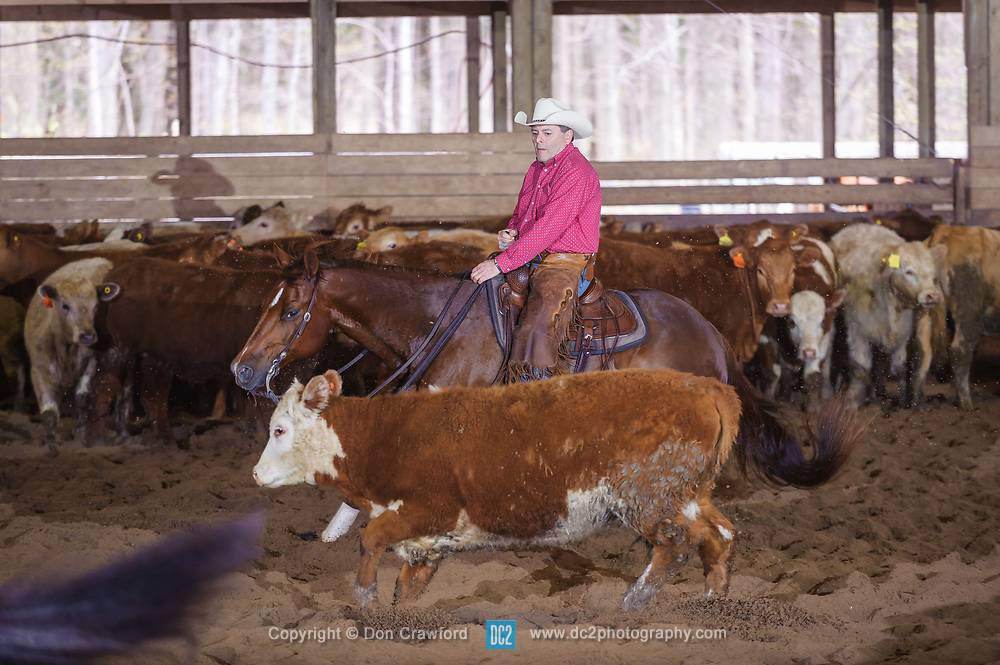 April 29 2017 - Minshall Farm Cutting 1, held at Minshall Farms, Hillsburgh Ontario. The event was put on by the Ontario Cutting Horse Association. Riding in the 25,000 Novice Horse Non-Pro Class is Reagan Zingbeil on Maxies Cat owned by the rider.