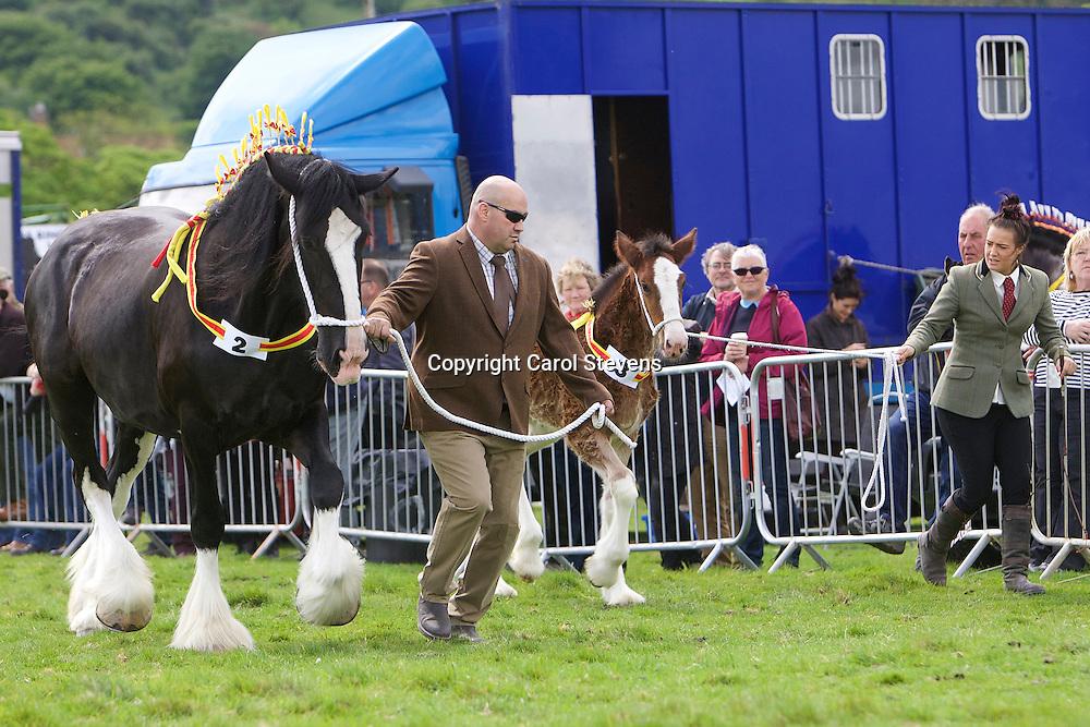 John Cross's Westfield Lucky Charm (s Leverton Oscar) with foal Crossingtons Ophelia (s Metheringham Upton Hamlet)