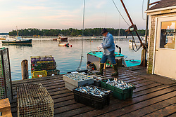 """Mark Havener (Captain of """"Who R U"""") Loading bait onto his lobster bait at the Friendship Lobster Co-op in Friendship, Maine."""