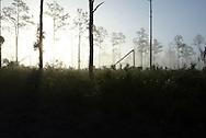 Smoke from campfires make for a surreal sunrise at Highlands Hammocks State Park near Sebring, Florida