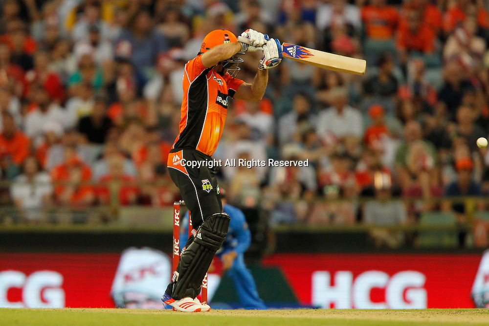 23.12.2016. WACA Ground, Perth, Australia. BBL Cricket League. Perth Scorchers versus Adelaide Strikers. David Willey plays through point in his short innings.