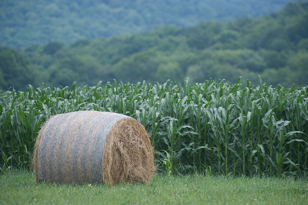 Corn field and round bale