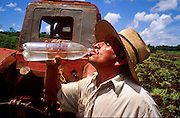 28 JULY 2002 - COLISEO, MATANZAS, CUBA: A farmer takes a drink of water from a bottle while tilling his cornfield near Coliseo, province of Matanzas, Cuba, July 28, 2002. The farmer said he is one of a growing number of private farmers in Cuba, who pays and grows his own crops and then sells most of the crop to the public at prices he sets rather than to the state which pays a much lower amount. .PHOTO BY JACK KURTZ