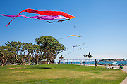 Flying Kites at the embarcadero Marina Park in San Diego