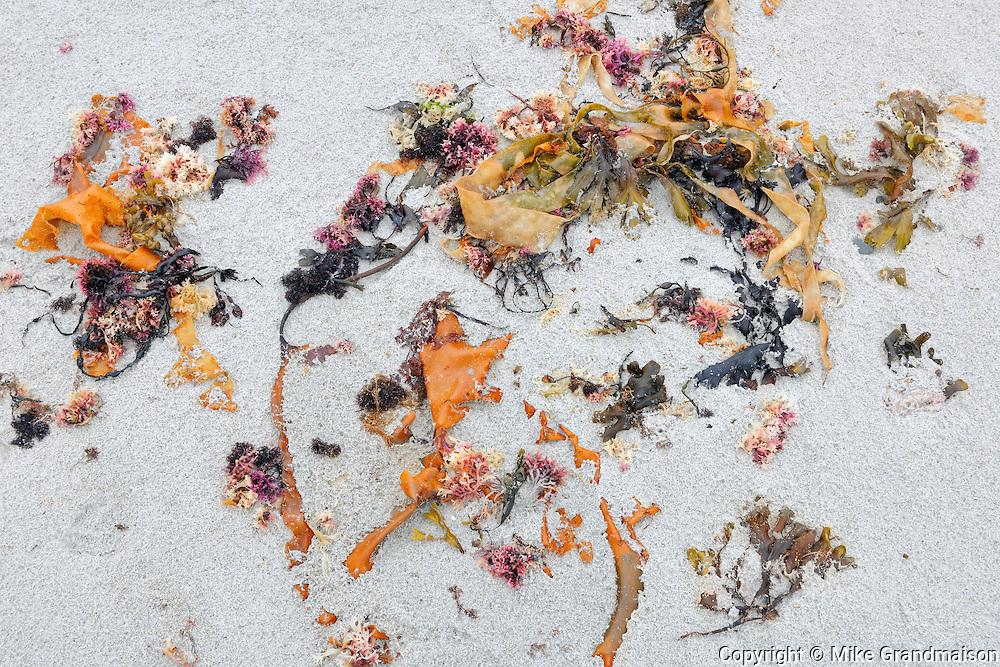 Seaweed on sand<br /> <br /> Seaside Adjunct of Kejimkujik National PArk<br /> Nova Scotia<br /> Canada