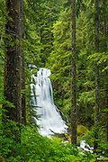 Upper Kentucky Falls, Siuslaw National Forest, Coast Range mountains, Oregon.