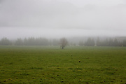 A tree stands alone in a field encased in mist.
