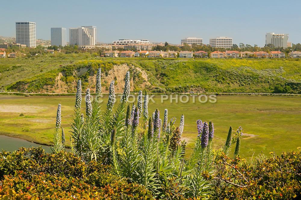 Fashion Island from Across the Back Bay Newport Beach, California