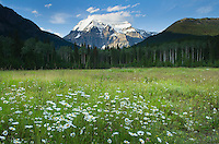 Wildflower meadows, Mount Robson Provincial Park British Columbia Canada