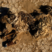 The Molly that didn't make it; remains of a sheep in the Kara Kum Desert.