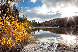 """Snowy Coldstream Pond 1"" - This yellow leaved Cottonwood tree was photographed at a snowy Coldstream Pond in Truckee, California."