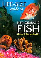 Have you ever struggled to identify a fish after seeing small pictures in books? Struggle no more. This book shows 38 of New Zealand's common fish species in living colour, including snapper, moray eels, seahorse, red moki, pig fish, blue maomao, pink maomao, demoiselles, flounder and more...This is a partner to the  Real-Size Guide to NZ Rocky Shore. The fish that live in different underwater  habitats reefs, mangroves, sandy bottoms, open water are presented in full colour montage free of any text, partnered with a monotone picture overlaid with text boxes for each fish that provides tells you information about each fish's identifying features, their lifestyle and where you might find them, and includes their scientific names...Fisherman, snorkelers, divers and anyone interested in the sea will find something of interest...Beautifully illustrated with underwater photography.   Paperback, 32 pages. ISBN Number: 9781869415860