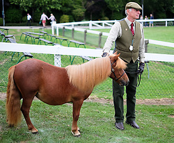 © Licensed to London News Pictures.16/07/15<br /> Harrogate, UK. <br /> <br /> A man waits with his shetland pony before entering the arena for his round on the final day of the Great Yorkshire Show.  <br /> <br /> England's premier agricultural show has seen three days of showcasing the best in British farming and celebrating the countryside.<br /> <br /> The event which attracts over 130,000 visitors each year displays the cream of the country's livestock and offers numerous displays and events giving the chance for visitors to see many different countryside activities.<br /> <br /> Photo credit : Ian Forsyth/LNP