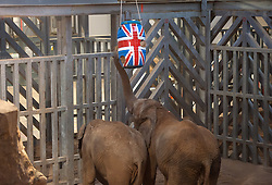 "© Licensed to London News Pictures. 17/12/2015. Wraxall, North Somerset, UK.  The Princess Royal, Princess Anne, opens 'Elephant Eden' and elephant play zone at Noah's Ark Zoo Farm in Bristol. HRH The Princess Royal officially opened the 20 acre Elephant Eden habitat – the largest of its kind in northern Europe. Described as a ""five star hotel for elephants"" by international elephant management specialist Alan Roocroft, Elephant Eden saw the arrival of its first African elephant in 2014 and has had finishing touches to the complex completed this year along with the arrival of further elephants. Now home to two characterful bull elephants Janu and M'Changa, Elephant Eden has been celebrated as offering welfare improvements to the industry and has been used as a helpful model for other collections to base their own building plans on, including international zoo colleagues from as far afield as Japan.<br />  Noah's Ark will also unveil its new Elephant Play Zone for children next to the elephant barn, which will include an impressive 4m high scale model elephant with built-in slide.<br /> Photo credit : Simon Chapman/LNP"