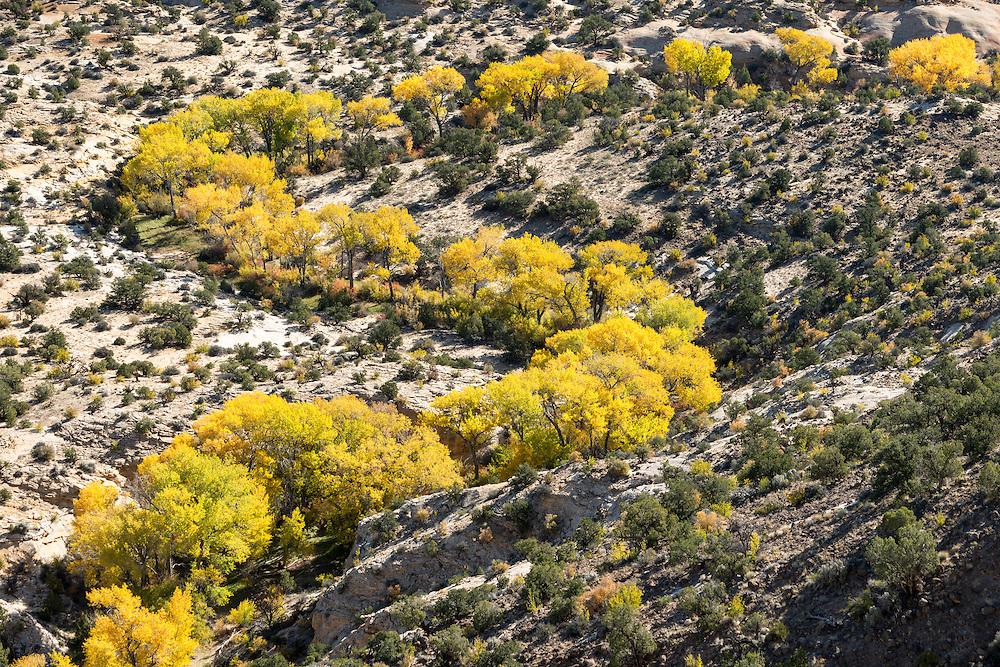 Herbstfarben in der Escalanteregion
