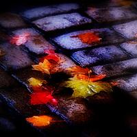Autumn leaves on cobblestones