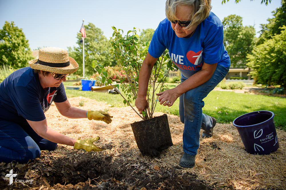 Jenny Ruth (left) and Janet Enroth, members of Lutheran Church of St. John, Quincy, Ill., install a plant in the Illinois Veterans' Home memorial garden on Sunday, June 11, 2017, in Quincy. The two volunteers were part of a servant event that was made possible through a Stand With Your Community grant provided through a partnership between the LCMS, Thrivent Financial and Lutheran Church Extension Fund (LCEF). LCMS Communications/Erik M. Lunsford