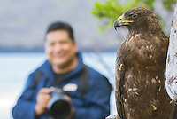 Photographer and Galapagos Hawk at Espumilla Beach on Santiago Island, Galapagos, Ecuador.