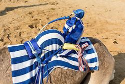 remote controlled robot jockey at camel racing club at Al Marmoum outside Dubai  in United Arab Emirates