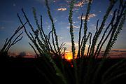 Autumn in the Coronado National Forest, Sonoran Desert, Santa Rita Mountains, Green Valley, Arizona, USA.