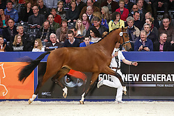 486 - Grande E<br /> KWPN Stallion Selection - 's Hertogenbosch 2014<br /> © Dirk Caremans