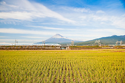High speed train crossing between rice field and Mt. Fuji, Honshu, Japan