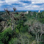 Tikal. Guatemala.