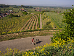 Woman hiking through vineyard terraces and village of Oberrotwei, Baden-Wuerttemberg, Germany