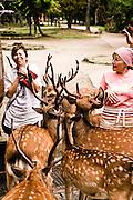 Sacred deer at Nara park.