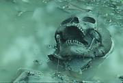 Valdivain Skeleton<br />4000 Year Old Culture<br />Valdivia.  Coast of ECUADOR.   South America