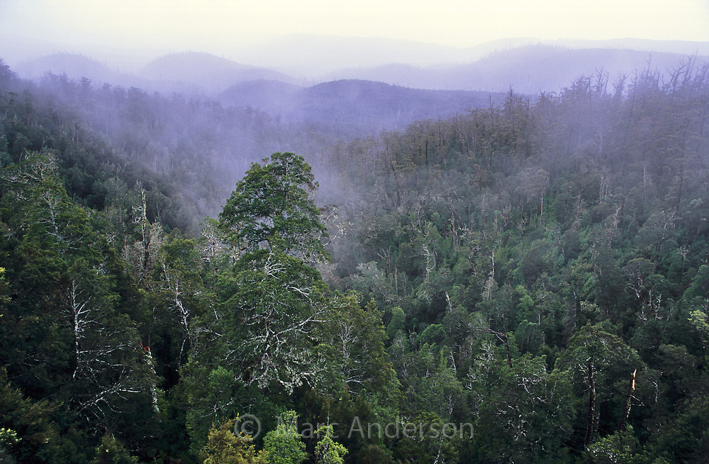 Rainforest in the Hartz Mountains National Park, Tasmania