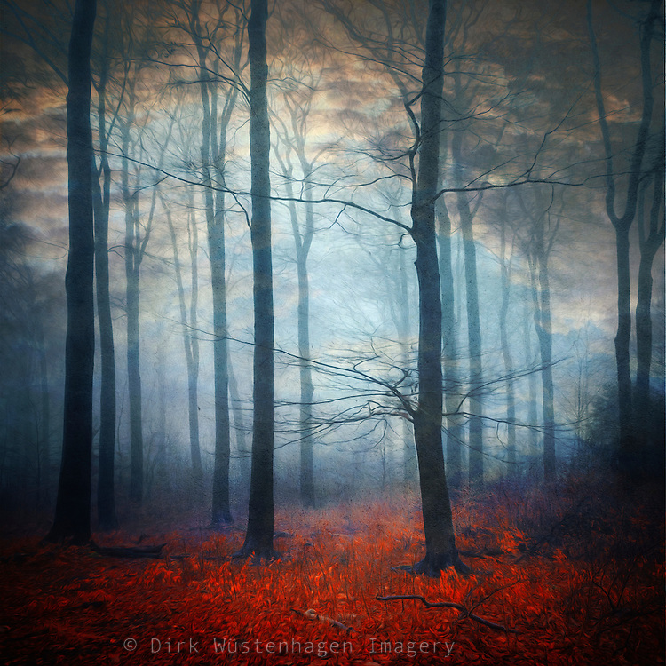 Mysterious dreamlike  forest scenery - manipulated photograph<br />