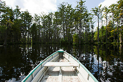 Boat ride through Cypress Gardens in Moncks Corner, SC.
