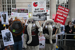 Campaigners are staging a demonstration for the protection of wild elephants in front of Lancaster House where the Illegal Wildlife Trade conference is taking place with world leaders, Cleveland Row,  London, United Kingdom. Thursday, 13th February 2014. Picture by Daniel Leal-Olivas / i-Images