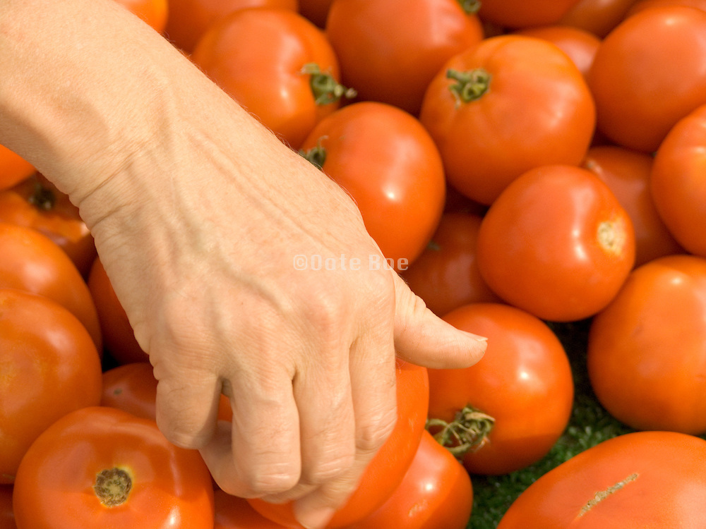 woman taking a tomato from a stack of organic tomatoes