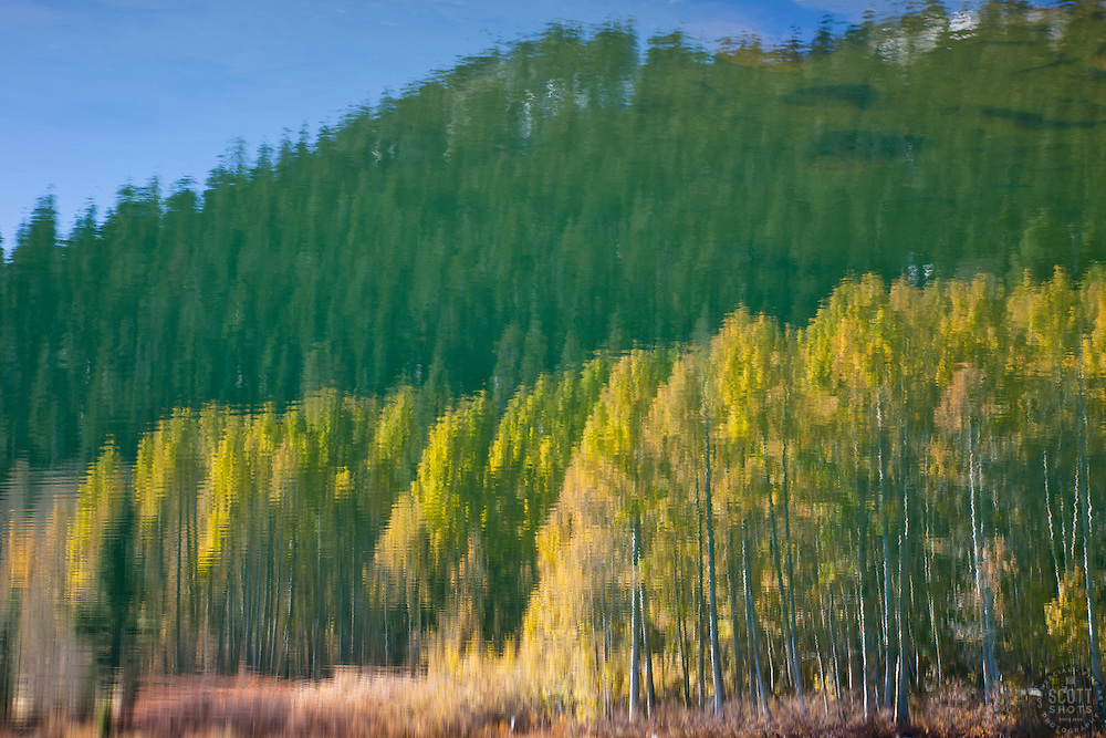 """""""Aspen Reflection on Water 3"""" - This is a photograph of an aspen reflection on the surface of Marlette Lake."""