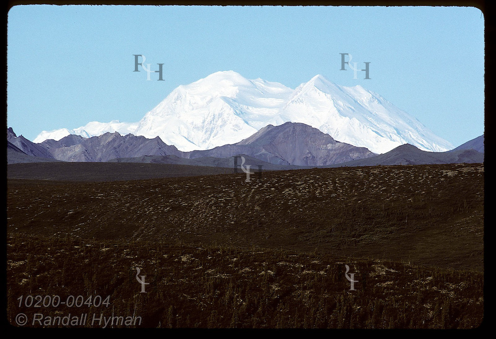 Snowy Mt. McKinley towers behind Cathedral and Sable Mountains on August morn; Denali National Park, Alaska