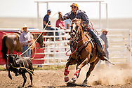 Rocky Boy Rodeo, Indian cowboys, Tie Down Roping, calf roping, Rocky Boy Reservation, Montana, Preston Watson, Chippewa Cree