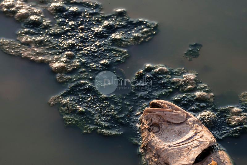 Pez muerto por la sequía. Pantano de Almansa. Albacete ©ANTONIO REAL HURTADO / PILAR REVILLA