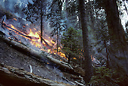 Prescribed Fire, Sequoia and Kings Canyon National Parks, California,
