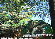 Philadelphia Zoological Park, Flowering Spring Trees, Tortoise. Philadelphia gardens and arboretums, PA