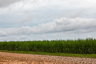 Site of Formosa's planned chemical plant in Welcome, LA, in St James Parish.