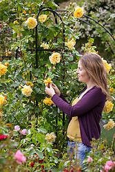 Deadheading climbing roses