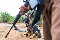 Dogs have become an absolute game changer in the battle against rhino poaching with them being able to assist in detection work around persons, vehicles or buildings. Most importantly, they speed up tracking and follow up operations immensely and this has led to an increased arrest rate of poachers.