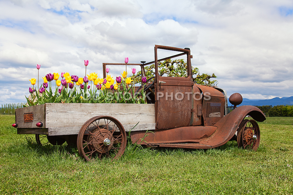 Old Rusty Vintage Truck in Palouse Washington